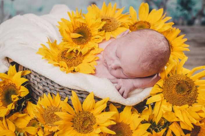 Newborn Sunflowers